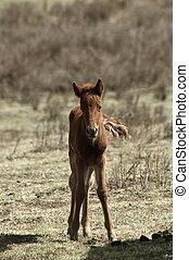 Colt - A young colt