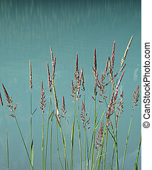 Reeds in a turquoise lake