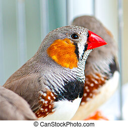 Zebra Finch on a blur background