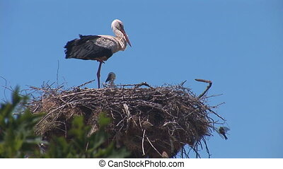 stork 5 - Stork standing in the nest