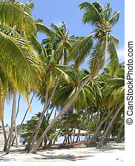 Tropical seashore with palm trees