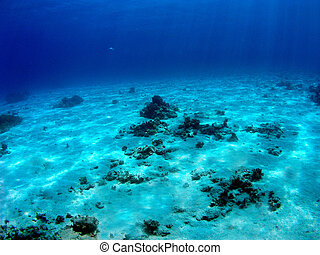 Seabed in Red Sea