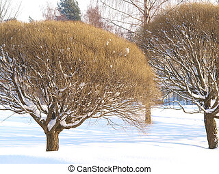 Trees in park at winter, fresh snow cower