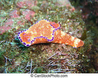 yellow sea slug in japan