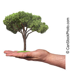 tree in a hand, isolated - concept symbolizing the care of...