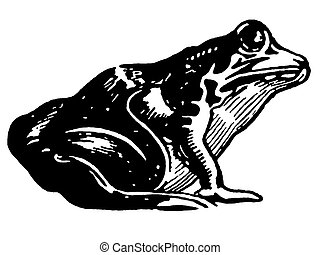 A black and white version of an illustration of a toad