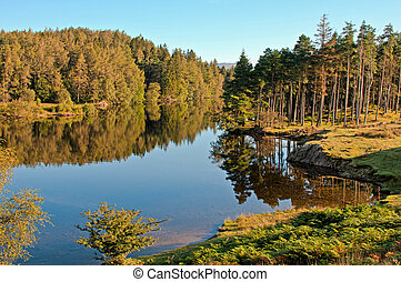 Tarn Hows - Early morning at Tarn Hows in the Lake District...