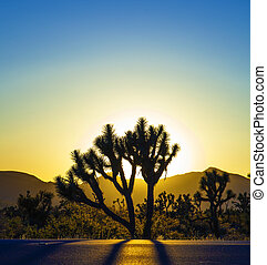 joshua tree in sunset - joshua trees with mountains in...