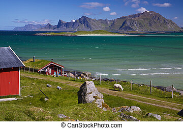 Panorama on Lofoten - Animal farm with sod roof on Lofoten...