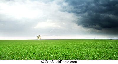 lonely tree on a field Hungary