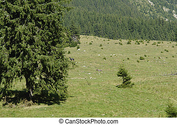 Piatra Craiului Mountains - idyllic scenery around the...