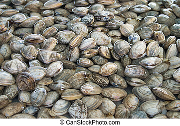 Oyster - Fresh oyster sales in the market.