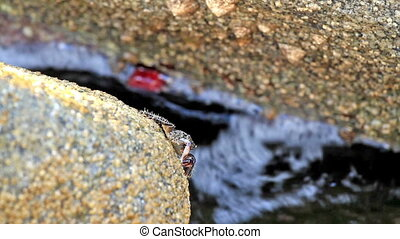 Crab - In a  rock a crab eating