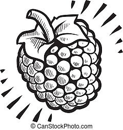 Raspberry fruit sketch - Doodle style fresh, juicy raspberry...