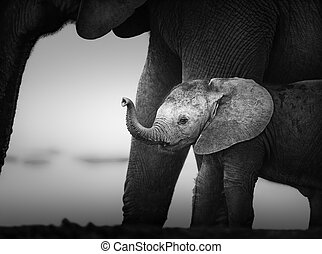 Baby Elephant next to Cow (Artistic processing) Addo...