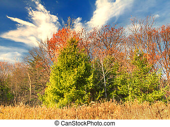 Autumn Colors - Late Autumn brings vibrant Fall colors and...
