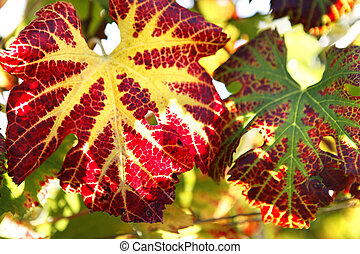 Colorful leaves on a tree