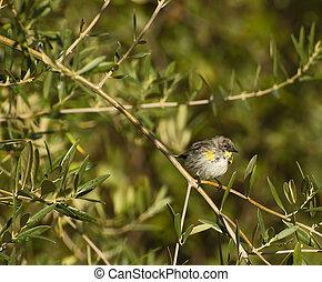 Little Bird - Little bird perched on branch