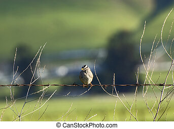 little bird on wire