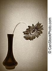 droopy daisy in sepia