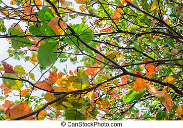 Colorful leaves in the nature