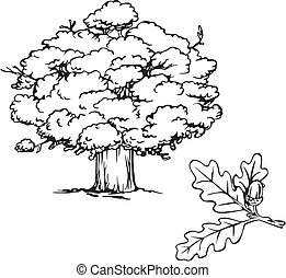 Oak tree and branch with acorn. Black and white vector...