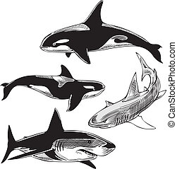 sharks and killer whales - Sharks and killer whales. Set of...