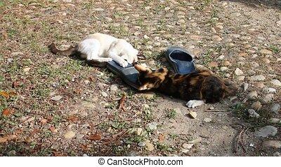 slipper cat fight