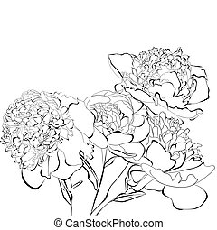 Peony flowers - Template for card Peony flowers