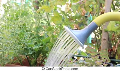 watering can - Using plastic watering can in a garden