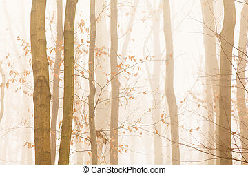 Trees quickly disappearing in yellow bright fog