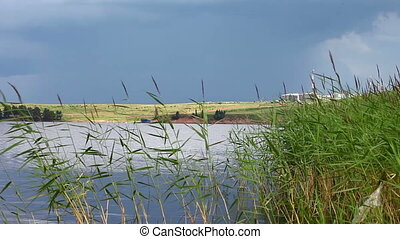water and green cane on summer day - water and green cane at...