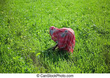 Indian women work at farmland