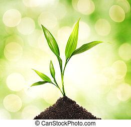 växt, abstrakt, ung, suddig, bakgrund,  över