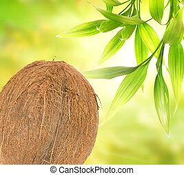 Coconut over abstract green background