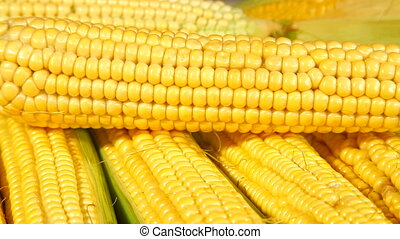 DOLLY: Corn On The Cob - Fresh corn on the cob