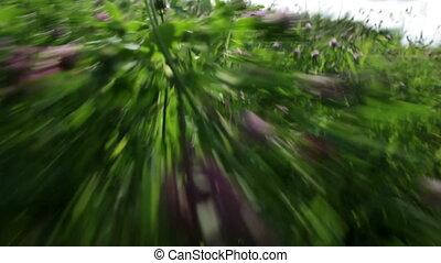 Fast run through the grass.
