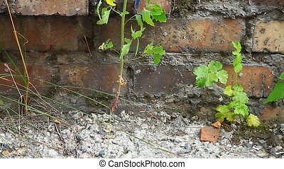 Brick wall, green grass - Green leafs on a background of...