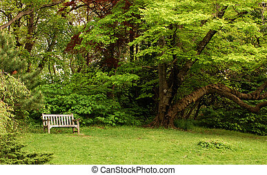 Park bench with tree nearby - Park bench in grassy area with...