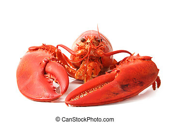 red lobster - cooked red lobster isolated on white