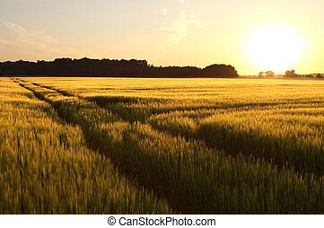 Spring sunset over the field - Sunset over the field with a...