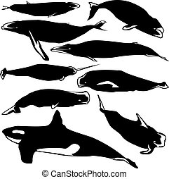 Whales vector silhouette