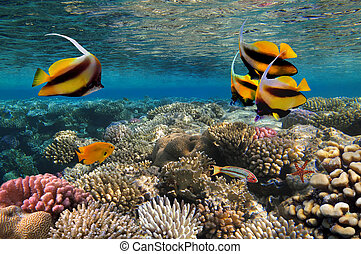 Photo of a coral colony.