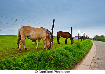 Horse Farm - Fence under Electric Current Surrounding the...