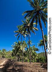 Coconut grove on a tropical island
