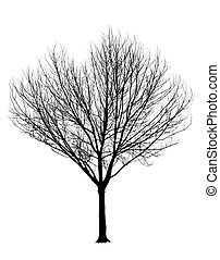 Bare Tree Silhouette Isolation - Bare Tree Silhouette...