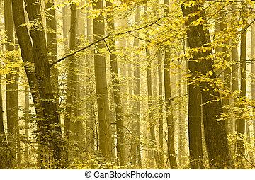 Autumn trees in a fog. - Detail of a forest in autumn. Trees...
