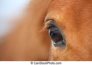 Chestnut horse eye - Beautiful chestnut horse eye close up