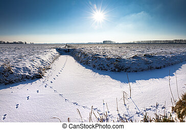 Animal tracks landscape - Animal tracks in the snow on a...