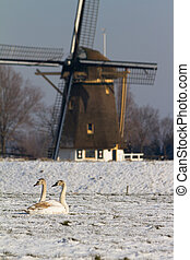 Swans at the mill